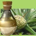Golden Kewra Fragrance