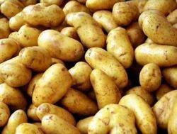 Potato K Pukraj Seeds