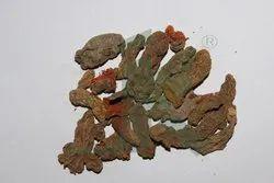 Organic CURCUMA LONGA Turmeric Rhizomes