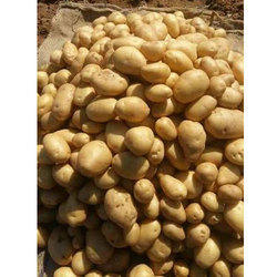 50 kg Badshah Potato, Packaging: Jute Bag