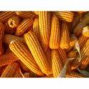 Dry Corn Cob