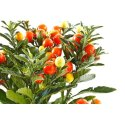 Ayurvedic and Herbal PCD Pharma Franchise in Idukki