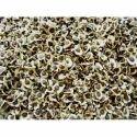 Moringa Lat Mok Seeds