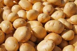 Yellow Round Fresh Potato, Packaging Size: 20 Kg
