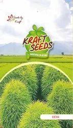 Kochia Fire Bush Seeds, Packaging Type: Packet