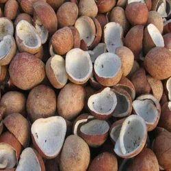 Coconut Nut Copra