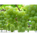 Grapes Cold Storage Rental Services