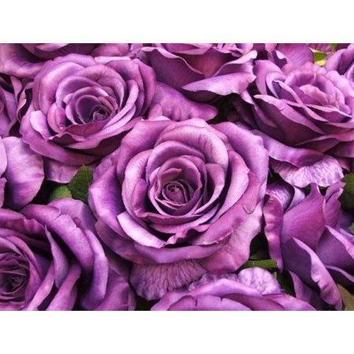 Vinyl Purple Rose Wallpaper