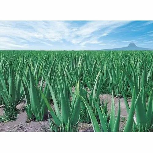 Agro Products Exporters,Agro Products Manufacturers,Agro