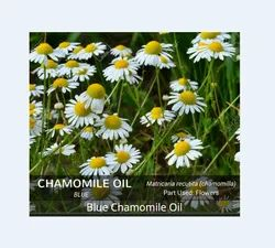 Blue Chamomile Oil