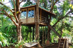 Tree House architecture India