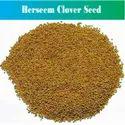 Berseem Clover Seed