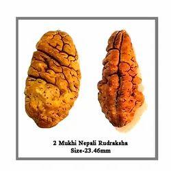 Oval Natural 2 Mukhi Nepali Rudraksha, Size: 23.46mm
