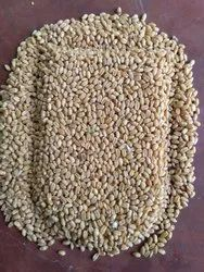 Brawon pundir Agro farm Wheat Grains, Pack Type: Jut Bag, Size: Nornal