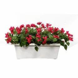 Artifcial Boginvilla Plant