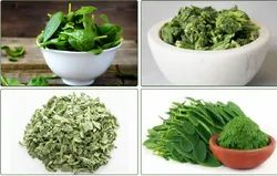 A Grade Freeze Dried Spinach