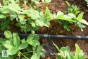 Agriculture Drip Irrigation