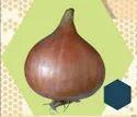 Light Red Onion Seeds