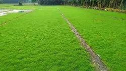 Green Selection Lawn Grass
