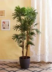 Artificial Raphis Tree