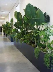 Plant Rental Service 100 Plant ( indoor Outdoor