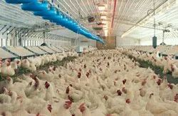 Steel Commercial Building Ec fully automatic poultry shed