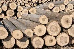 Popular Wood Transportation