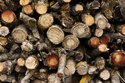 Firewood Logs Supplier india