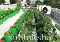 Roof Top Farming Grow Bags