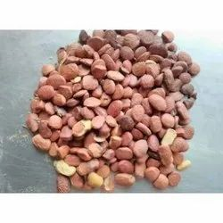 Natural Brown Pongamia Glabra Seed, Dried, Packaging Size: 50 Kg