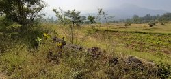 Agricultural Land for Sale in Merawane, velhe, pune, Size/ Area: 6 Acres