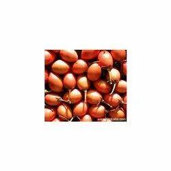 Mimusops Elengi Seeds
