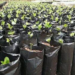 LDPE Nursery Bags