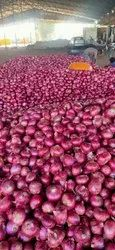 A Grade Maharashtra Onion, Packaging Size: 50 Kg, Onion Size Available: Large