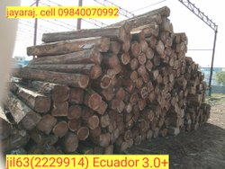 Ecuador Short Length