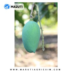 Yellow A Grade Natural and Organic Kesar Mango, Packaging Size: 10 Kg, Packaging Type: box