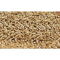 FEED GRADE BARLEY, Organic