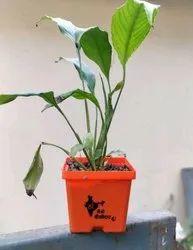 Gift A Plant Main Bhi Chaukidaar Pot