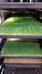 Fully Automatic All Weather Hydroponic Wheatgrass Unit