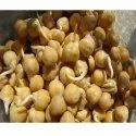 Indian Sprouted Chick Peas Fresh, Gluten Free