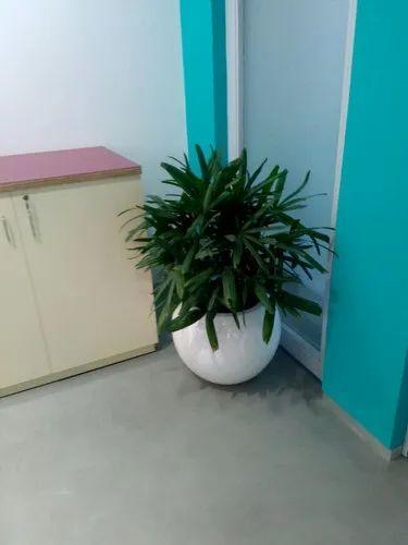 Nursery Plants Pots