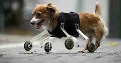 Dog  Prosthesis