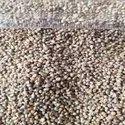 Spe Indian Green Millet, -, Organic