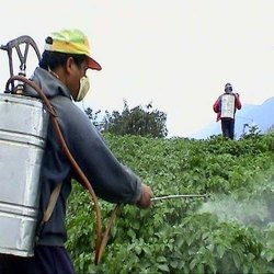 Chemical Pesticide