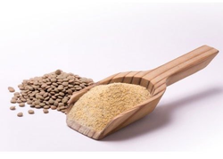 Lentil Protein Powder 70%, Packaging Size: 20 Kg