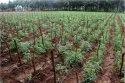 Irrigation Drip Kit - 4000 Sqm - 1 Acre