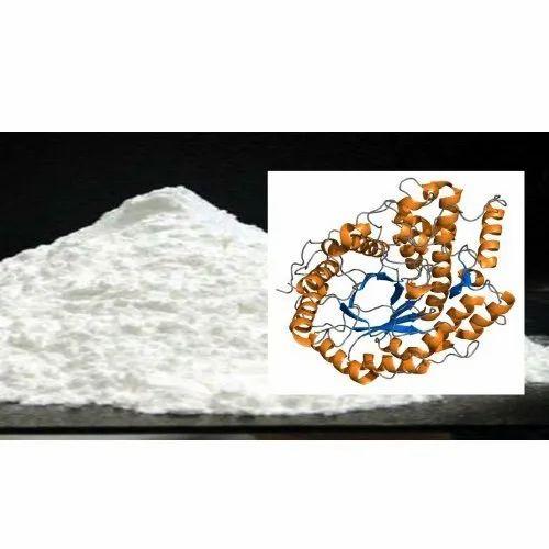 Beta Amylase Enzyme