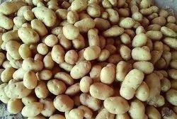 Fresh 3797 Potato