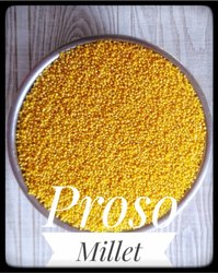 Organic Proso Millet