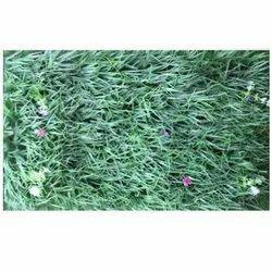 Mat M-2 Artificial  Wall Grass